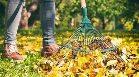 A woman raking fall leaves